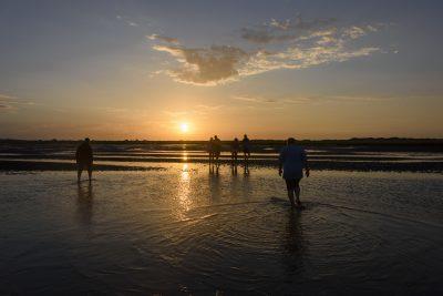 Eine Wandertruppe läuft durch das Wattenmeer auf Langeoog in Richtung Sonnenuntergang