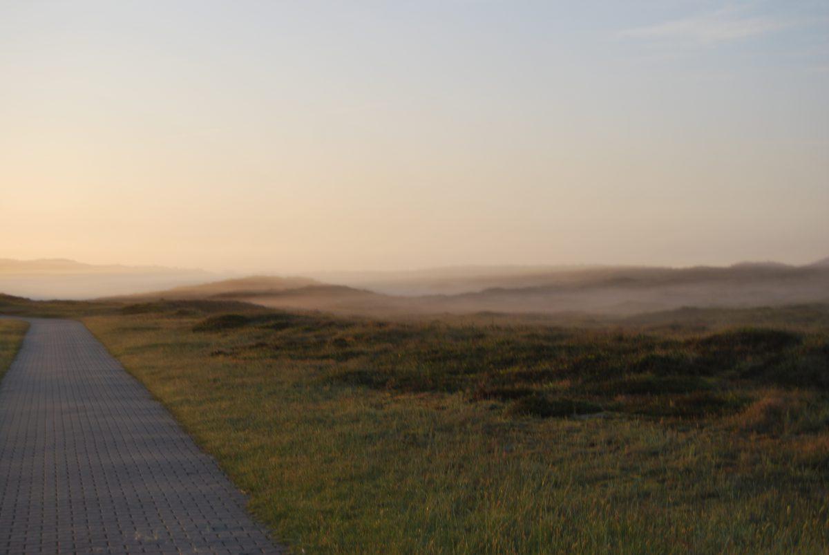 Die Dünenlandschaft im Nebel