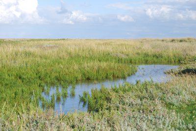 Ein kleiner Wasserbereich mitten in der Graslandschaft