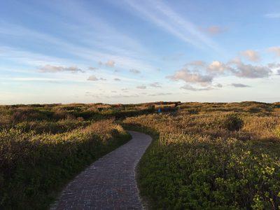 Ein Pflastersteinweg durch die Graslandschaft